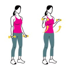 Dumbbell Bicep Curl Standing