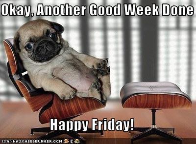 Friday Funny dog